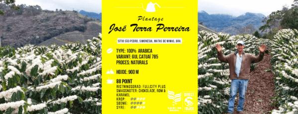 Gul Catuai fra Jose Terra Perreira, Brasilien